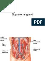 Suprarenal Gland