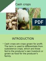Cash Crops Final