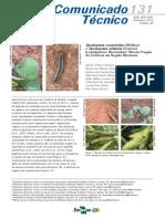 spodoptera cosmioides