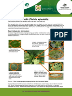 Diamondback Moth Fact Sheetind 2010-09-14
