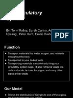 circulatory system assignment