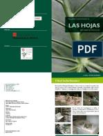 Las_Hojas