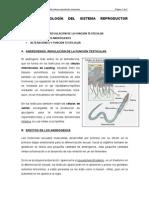 Tema i. Fisiología Del Sistema Reproductor Masculino