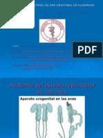 Aves Fisiologia Reproductiva