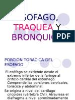Esofago, Traquea y Bronquios