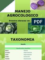MANEJO AGROCOLOGICO REPOLLO