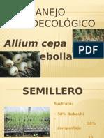 Manejo Agroecológico Cebolla