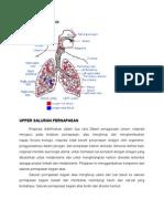 Anatomi Dan Fisiologi Tbc