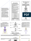 structure and function of a skeletal system