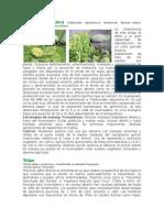 Manual de Plagas y Enfermedades