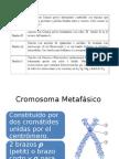 Analisis Cromosomico