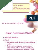 Organ Reproduksi Kelainan Ppt