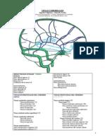 Venas Cerebrales.pdf