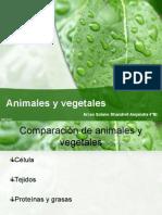 Vegetales y Animales