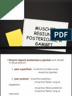 Muschii Regiunii Posterioare a Gambei2