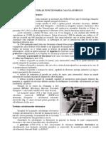 Structura_Calculatorului.doc