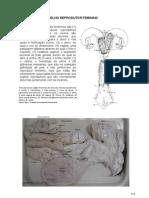 CAPÍTULO11-reprodutorfeminino