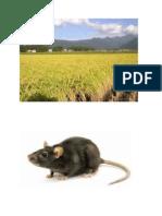 Kssr Sains 2015 Proses Hidup Haiwan Unit Rantai Makanan
