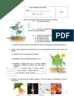 Ficha de Trabalho - Plantas