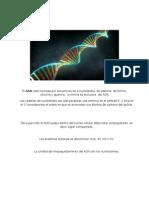 ADN Y RNA