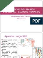Formacion Del Aparato Urogenital _ Esbozos Primarios (1)