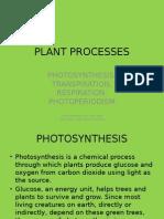 plant processes