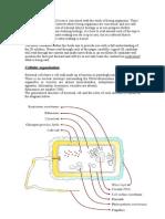 Unit1 Summary Notes IB