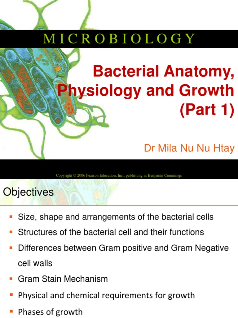 Bacterial Anatomy & Physiology | Cell Membrane | Gram Positive Bacteria