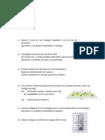 Teorema de Pitagoras Problemas