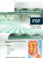 Colon Rectum Anus
