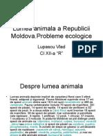 Lumea Animala a Republicii Moldova