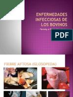 Enfermedades Infecciosas de Los BOVINOS Fernely