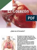 Fisiologia Del Corazon