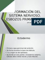 Formación Del Sistema Nervioso