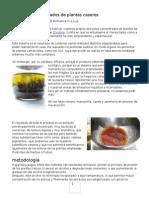 Extractos Concentrados de Plantas Caseros