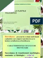 Pl.policarpice