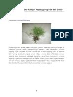 Cara Menanam Rumput Jepang yang Baik dan Benar.docx