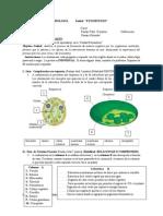 Prueba Fotosíntesis.3.3