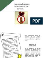 Conceptos Básicos Sobre Control de Brotes