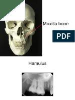 Radiography 2