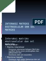 Interaksi Matriks Ekstraseluler Dan Sel Matriks