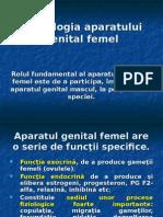 Morfologia-aparatului-genital-femel.ppt