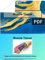 Muscular System II.ppt