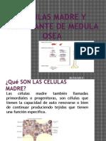 Lectura 3celulas Madre y Trasplante de Medula Osea