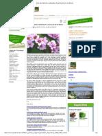 Sfaturi Pentru Ingrijirea Plantelor de Interior