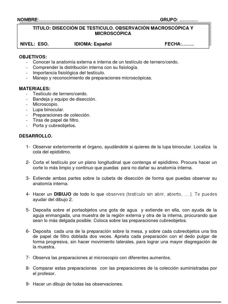 DISECCION DE TESTICULO - 3º ESO