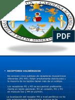 anticolinrgicos-100206172653-phpapp01.ppt