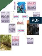 Biodiversity Concept Map