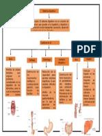 Mapa de Sistema Digestivo digital