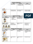 Muscle Insertion and Origin Hand Out - Copy